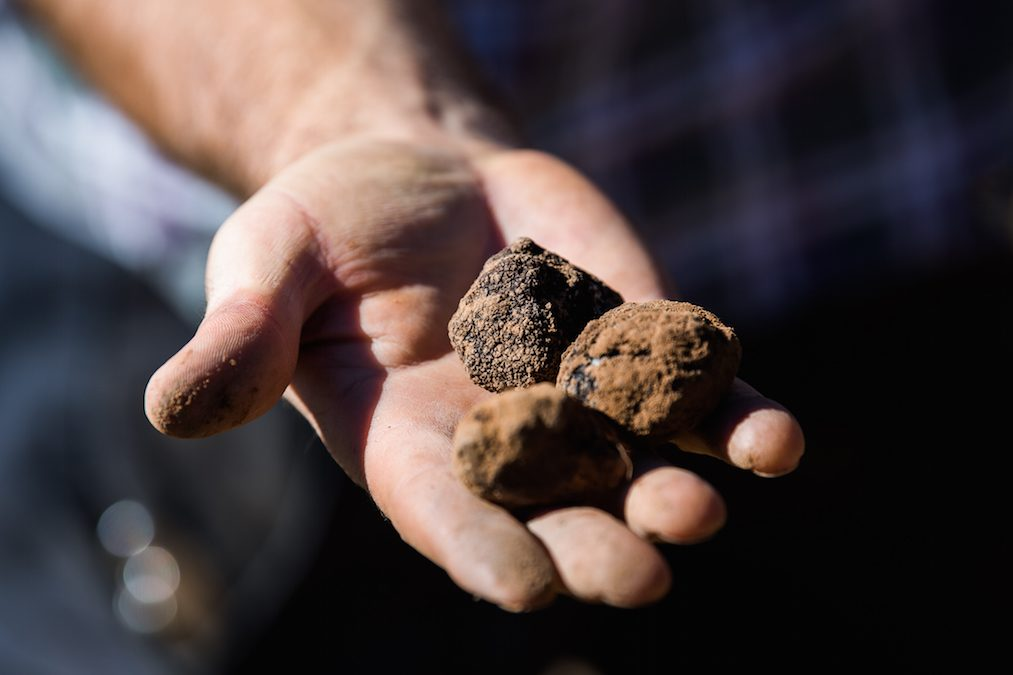 Truffle Time – What Are These Mysterious Delicacies?